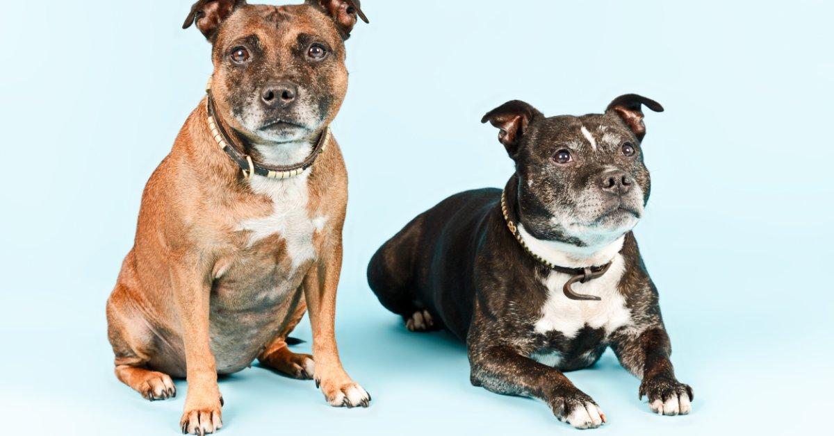 Willkommen Beim Veterinaramt Basel Stadt Potenziell Gefahrliche Hunde